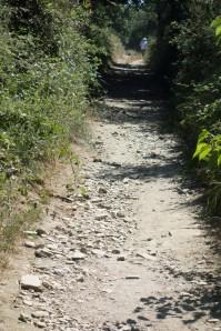 Camino 3-09
