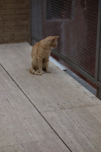 This is one of two cats I have seen on this entire journey. I was beginning to wonder if they existed in Europe.