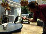 Cindy's birds