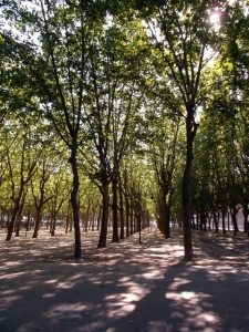 Avenue of trees