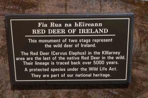 Trip to Killarney (3 of 25)